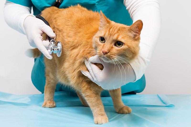 New Clients | Animal Kingdom Veterinary Hospital