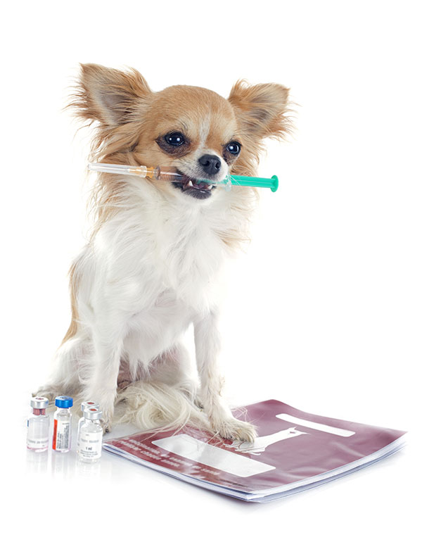 Veterinary Vaccinations in Las Vegas, NV | Animal Kingdom